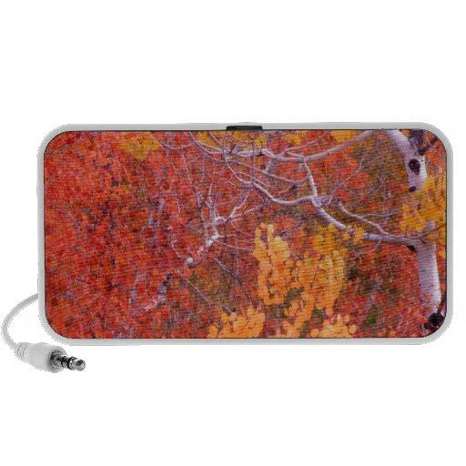 Ciudad de los árboles de Aspen del otoño de las ro Laptop Altavoz