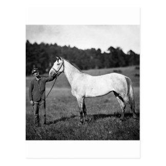 Civil War Horse, 1860s Postcard