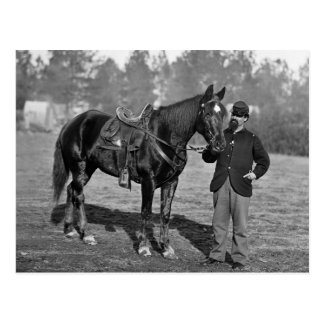 Civil War Horse, 1864 Postcard
