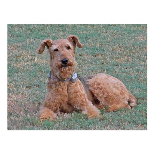 CJ- postal de Airedale Terrier