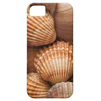 Clam shell background iPhone SE/5/5s case