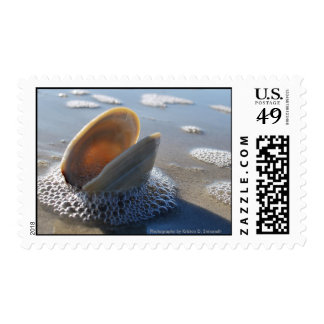 clam shell bubbles postage