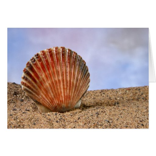 Clam shell card