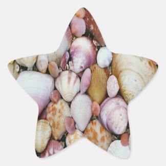 Clam Shell Star Sticker