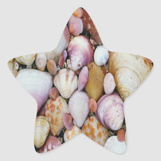 Clam Shell Star Stickers