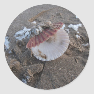 Clam shell stickers