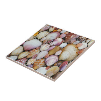 Clam Shell Tile