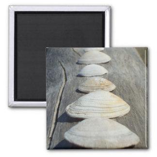 Clam Shells Magnet