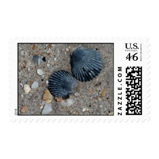 Clam Shells Stamps