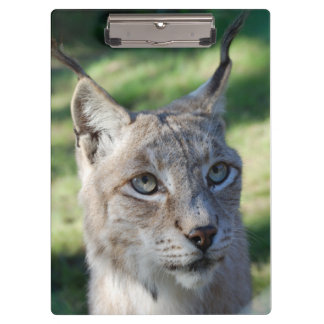 Clamping board lynx - photo Jean Louis Glineur Clipboard