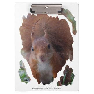 CLAMPING BOARD Squirrel squirrel ~ by JL GLINEUR Clipboard
