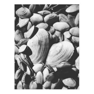 Clams along the Chesapeake Bay Postcard