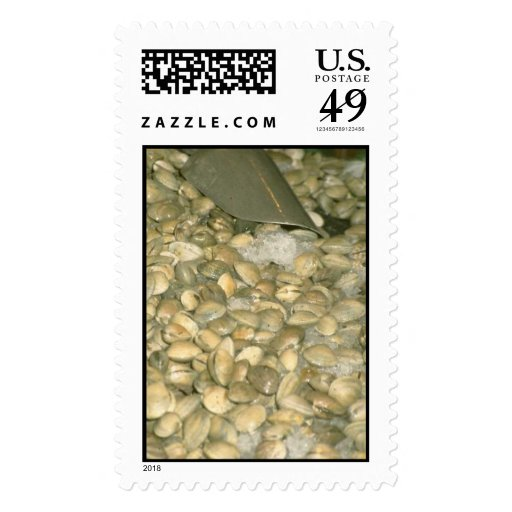 Clams Stamps