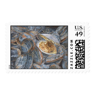 Clams Watercolor Postage Stamp