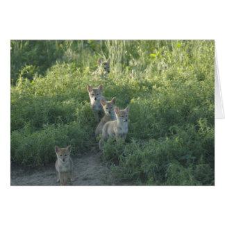 Clan del coyote tarjeta de felicitación