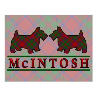 Clan McIntosh Tartan Scottie Dogs Postcard