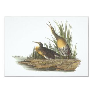 Clapper Rail, John Audubon Card