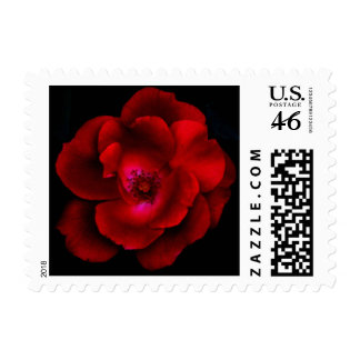 Clarendon Street Rose Postage