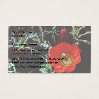 Claret Cup Cactus Business Card