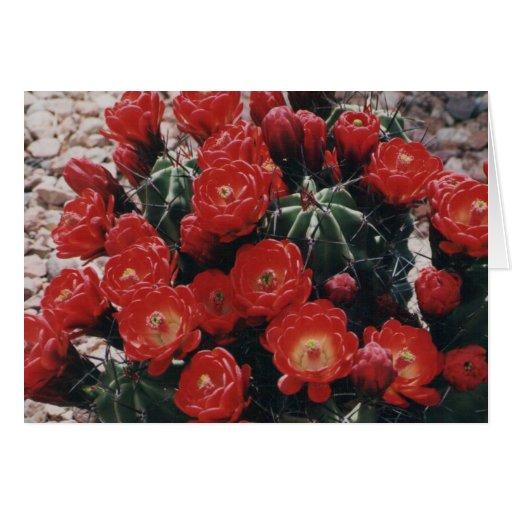 claret cup cactus card