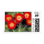 Claret cup cactus postage stamp