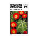 Claret cup cactus postage stamps