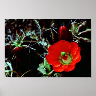 Claret Cup Cactus Print