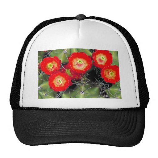 Claret cup cactus trucker hat