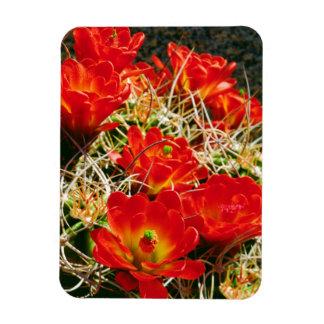 Claret Cup Cactus Wildflowers Magnet