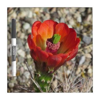 Claret Cup Hedgehog Cactus Bloom Dry Erase Board