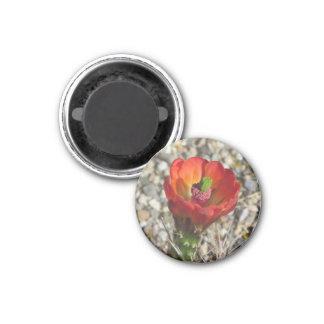 Claret Cup Hedgehog Cactus Bloom Refrigerator Magnets