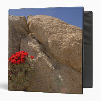 Claret cup or Mojave mound cactus in bloom 3 Ring Binder