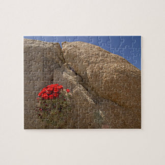 Claret cup or Mojave mound cactus in bloom Jigsaw Puzzle
