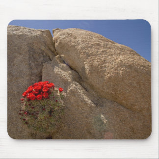 Claret cup or Mojave mound cactus in bloom Mouse Pad