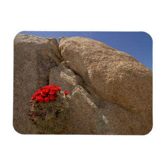 Claret cup or Mojave mound cactus in bloom Vinyl Magnets