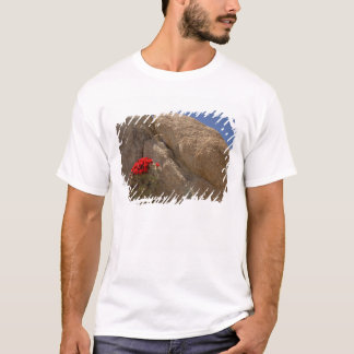 Claret cup or Mojave mound cactus in bloom T-Shirt