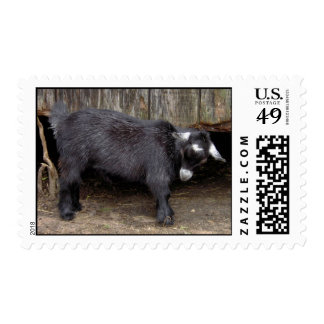 Claret the Pygmy goat postage stamps
