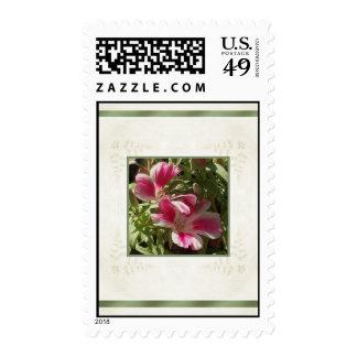 Clarkia Godetia Flower Stamps