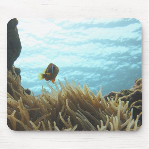 Clark's Anemonefish Mouse Pad