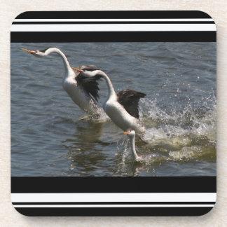 Clarks Grebe Birds Baby Family Wildlife Coasters