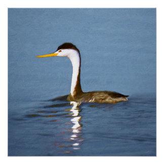 Clark's Grebe Painting - Original Bird Art Poster