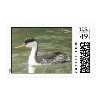 Clark's Grebe Stamp