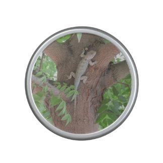 Clark's Spiny Lizard in a Tree Speaker