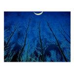 Claro de luna misterioso postales