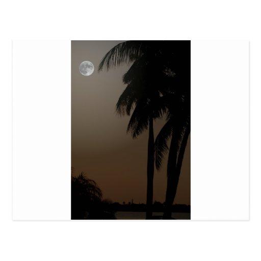 Claro de luna y palmas tarjeta postal