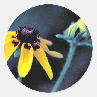 Clasping-leaf Coneflower Round Sticker