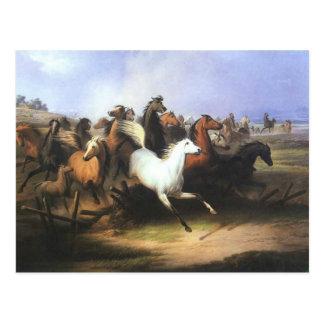 Classic Art Running Horses Postcard