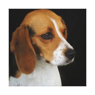 Classic Beagle Canvas Print