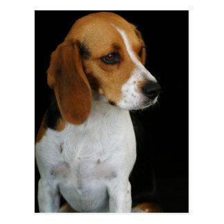 Classic Beagle Postcard