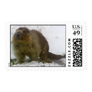 Classic Beaver Postage Stamp
